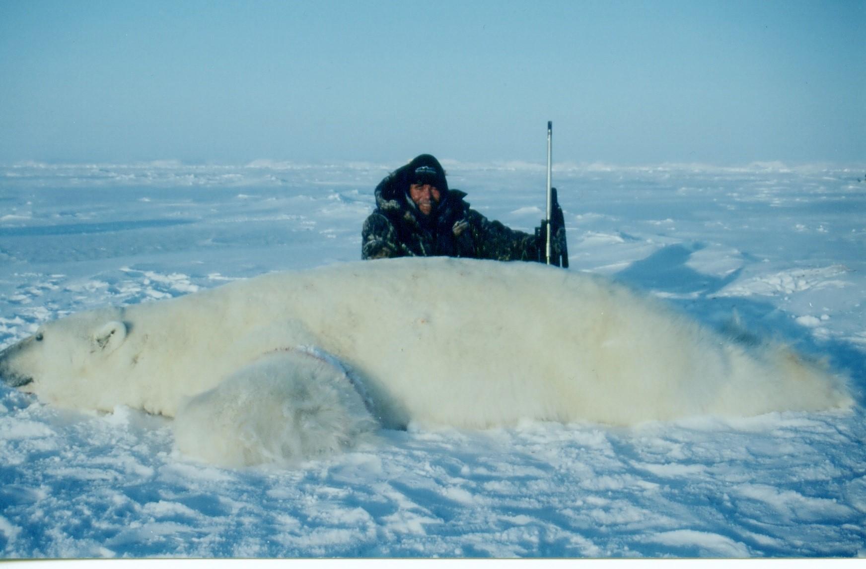 verdens største isbjørn